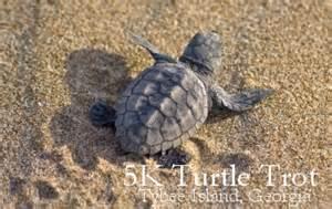 turtle trot 2016